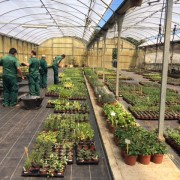 ceo_jardineria