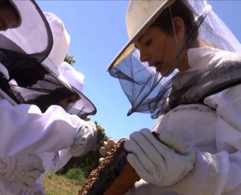 foto_nou díptic_taller apicultura