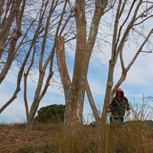 licitacio-manteniment-zones-verdes-arenys-de-munt_CEO-DEL-MARESME_jardineria-2
